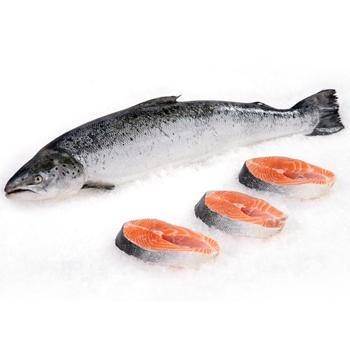 ماهی قزل آلای سالمون ویژه شکم خالی